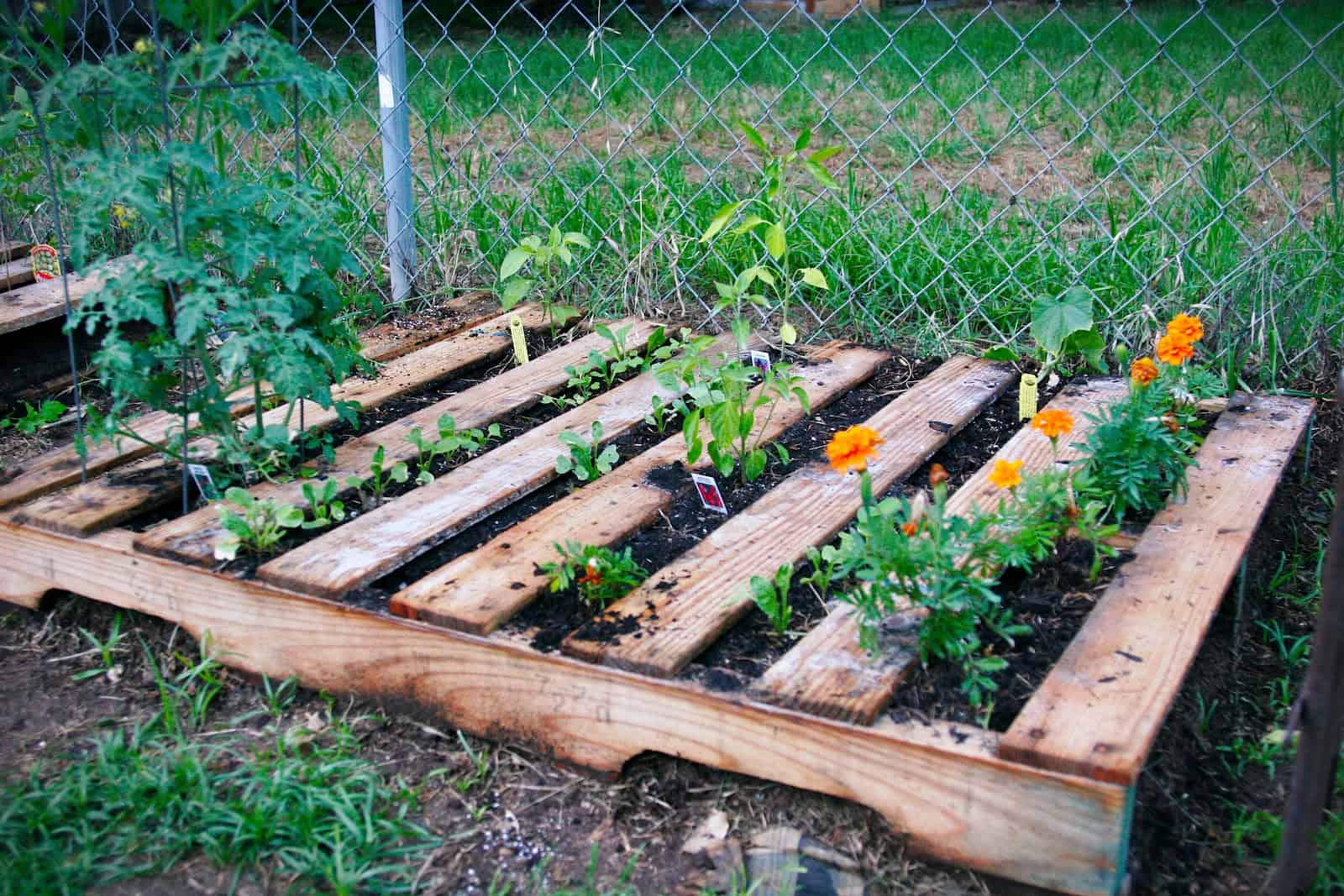 how to make a weedless raised wood pallet garden bed awesomejellycom - Pallet Garden Bed