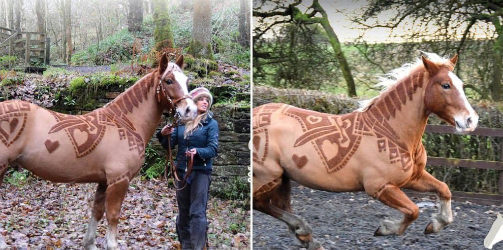 These Horses Get Haircuts Like You Have Never Seen Before