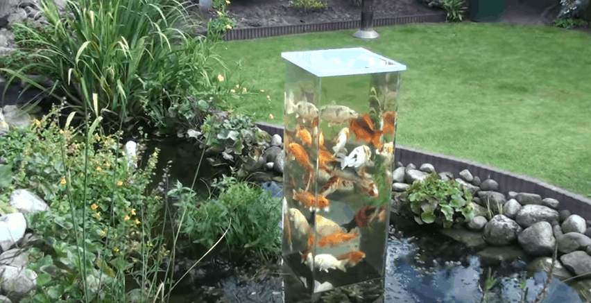 The coolest upside down koi pond that will spice up your for Koi pond how to