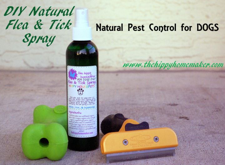 7 Effective Natural Tick Repellents You Can Make At Home