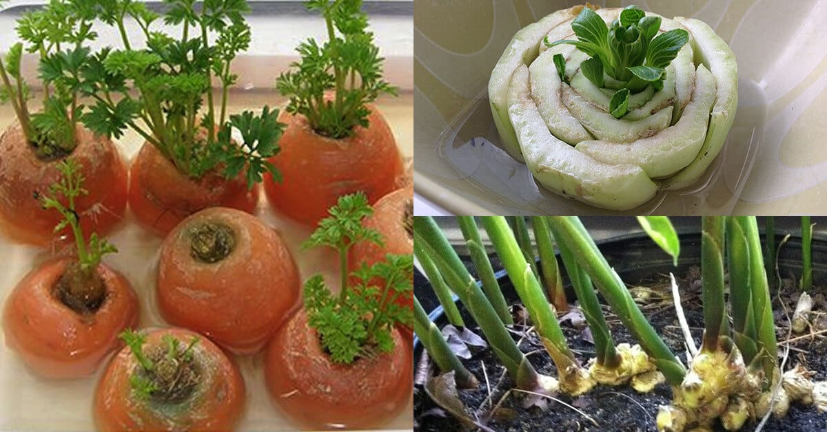 10 Vegetables You Can Re-Grow From Scraps
