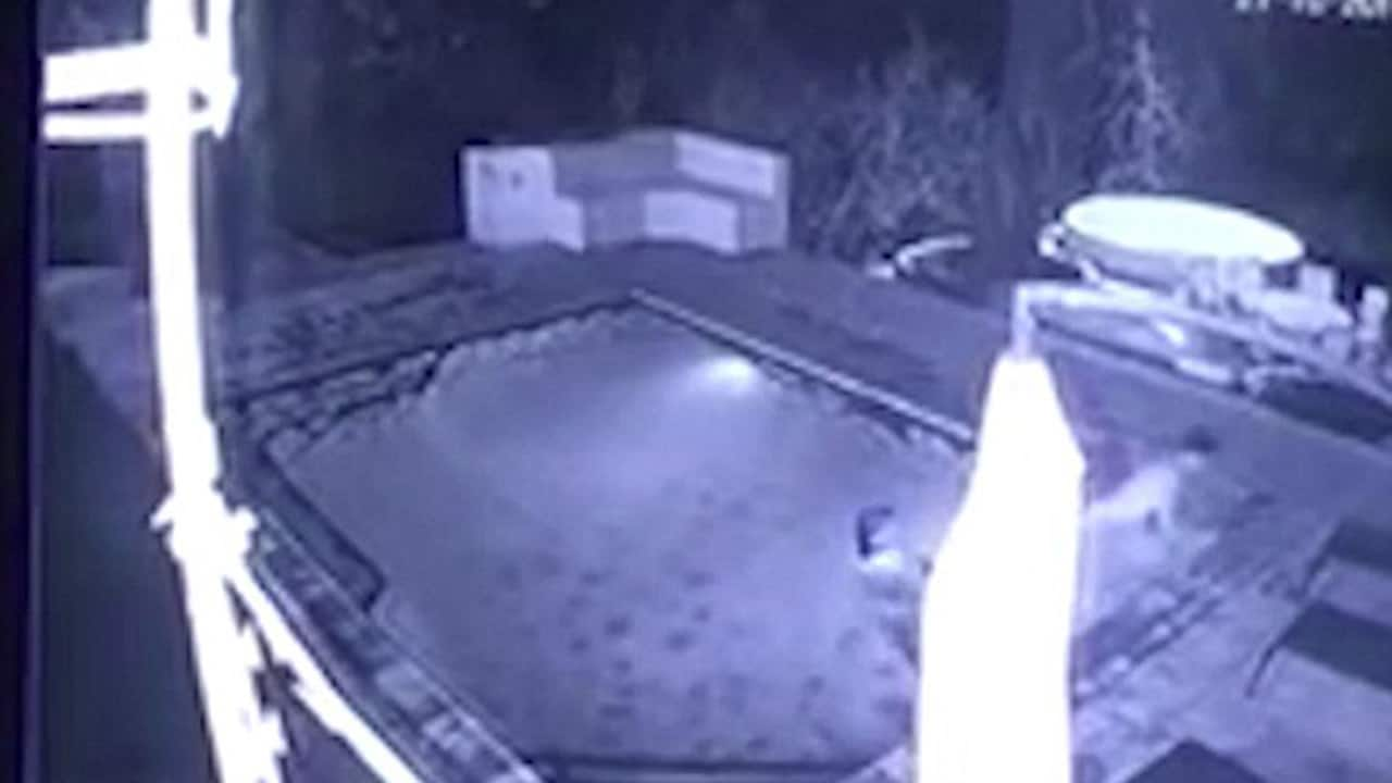Crocodile jumps into pool and attacks couple during late night swim for Late night swimming pools london