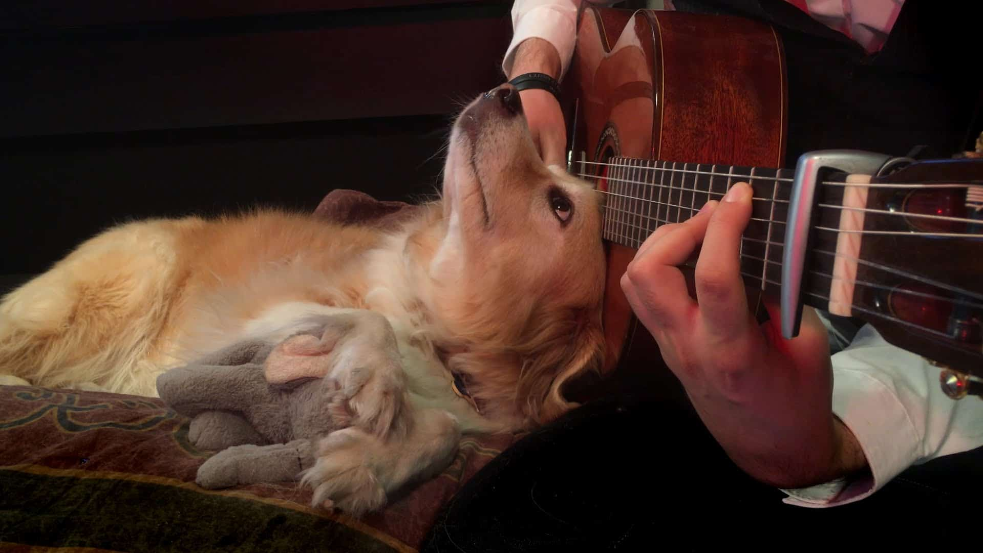 Dog Has The Best Reaction To Owner Playing Green Day On Guitar