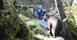 grizzly bear hiking trail