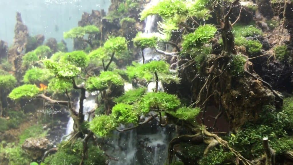 stunning and elaborate fish tank design features a waterfall made