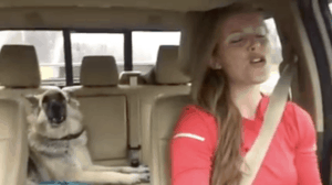 Bored German Shepherd Dozes-Off on the Back Seat… Until her Jam Comes On