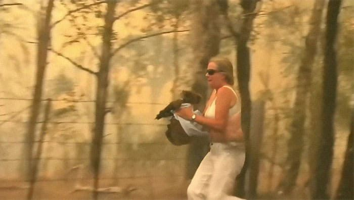 Woman Saves A Scorched And Screaming Koala With The Shirt Off Her Own Back